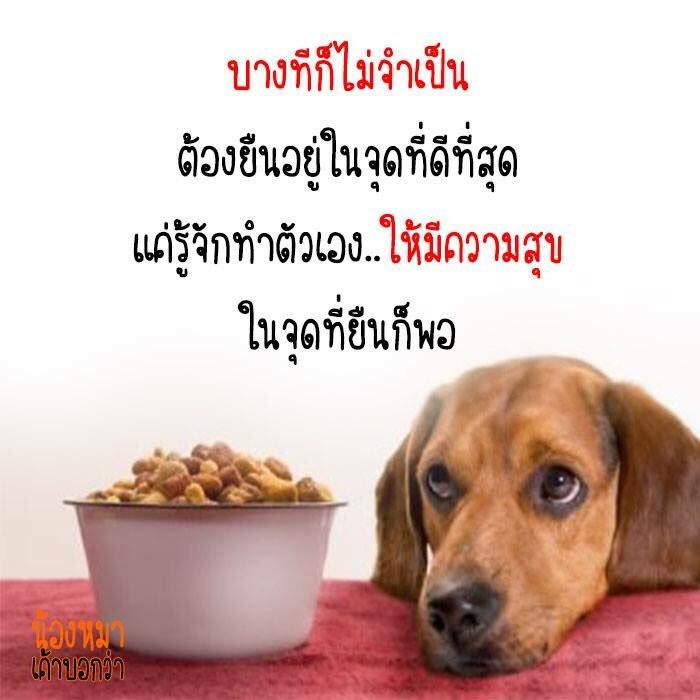 คำคมสุนัข