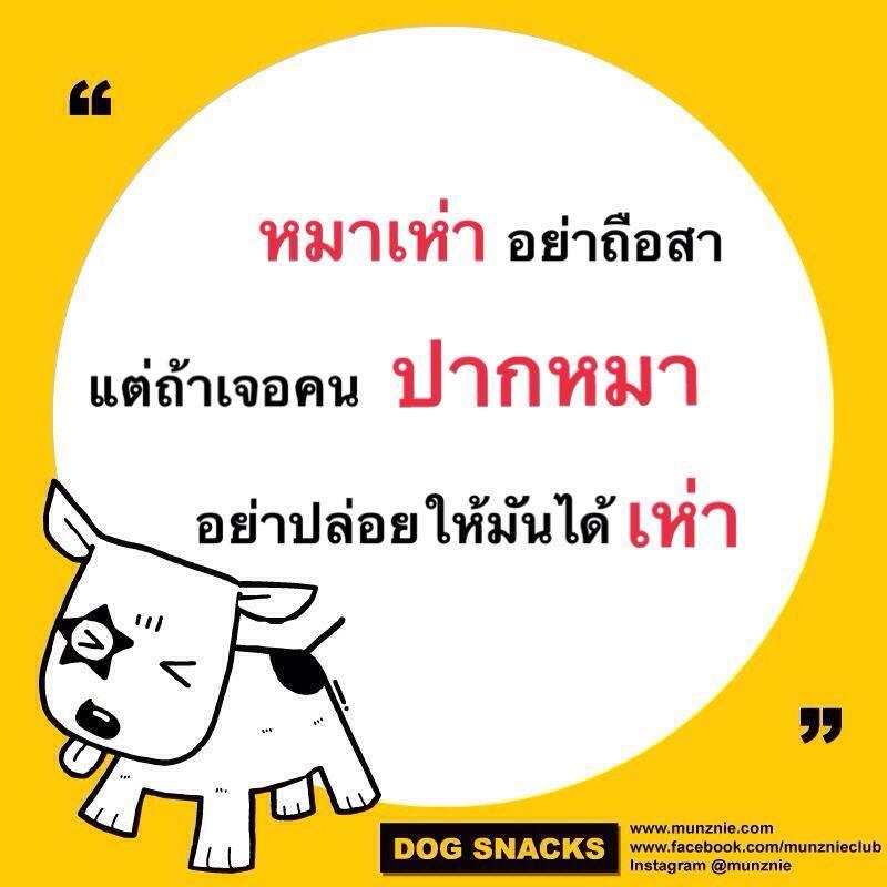 คำคมหมาหมา