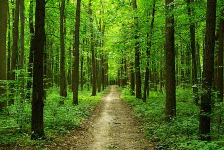 คำไวพจน์ ป่าไม้